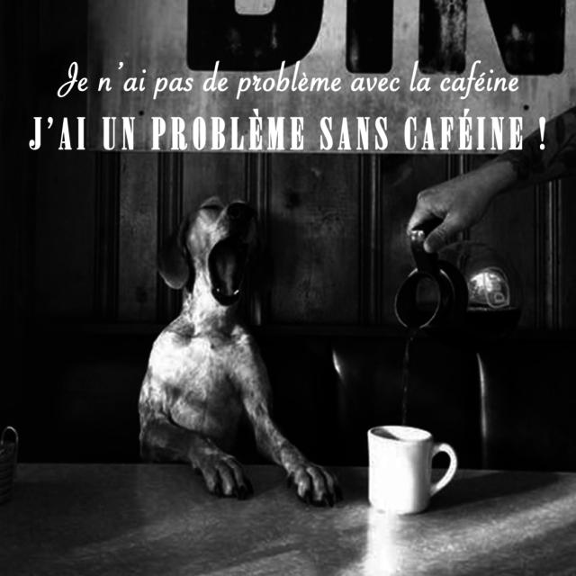 Photo d'un chien qui boit un café + citation